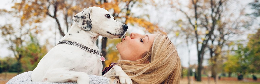 Do-Dogs-Remember-Their-Owners