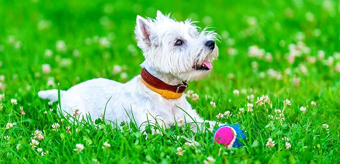 Dog sitting on the grass near the ball