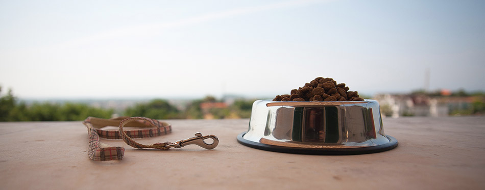 Leash and bowl with dog food