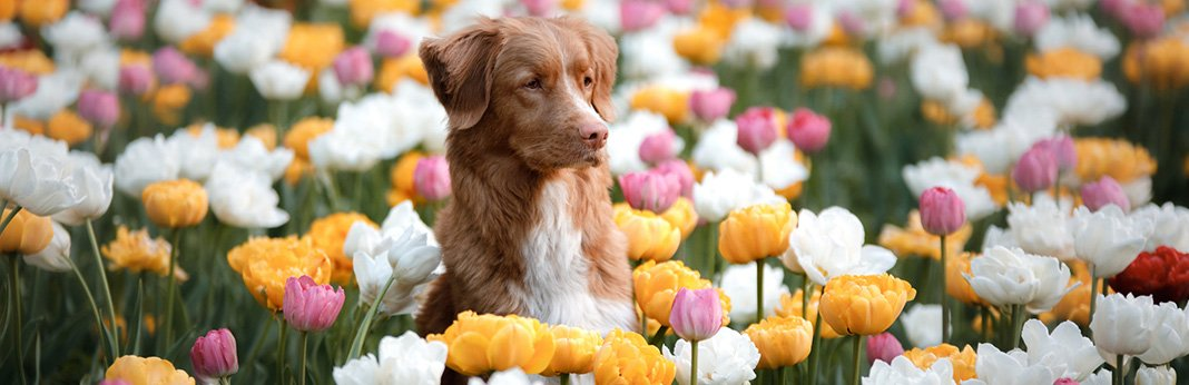 Plants That May Poison Your Dog: 10 Most Poisonous Plants for Dogs