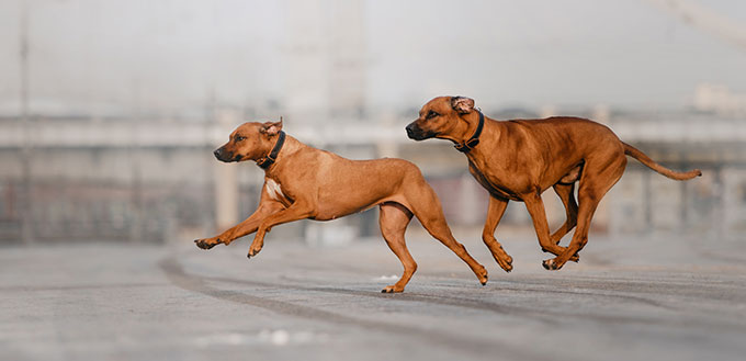 Two dogs running on the street