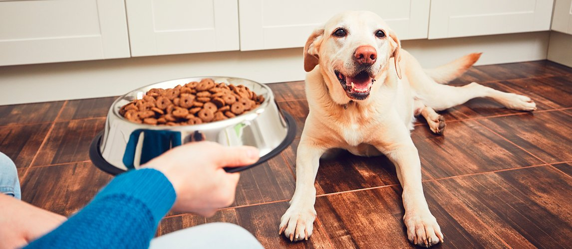 best-dog-food-for-picky-eaters