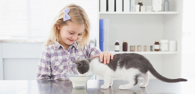 Why Do Cats like Milk? Is Milk Bad for Cats?   My Pet Needs That