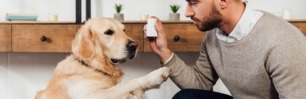 vitamin e for dogs uses & benefits