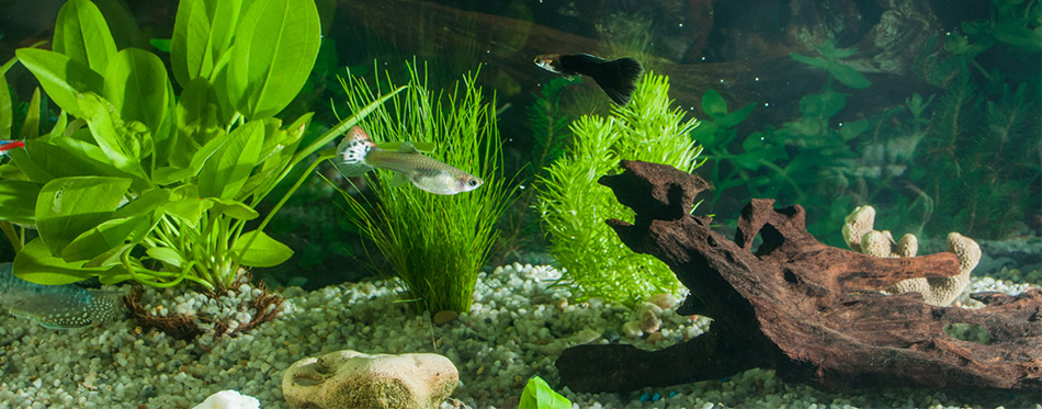 Aquarium with fishes, plants and rocks