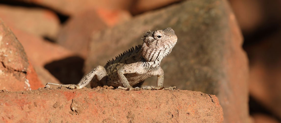 Best-Bearded-Dragon-Enclosure