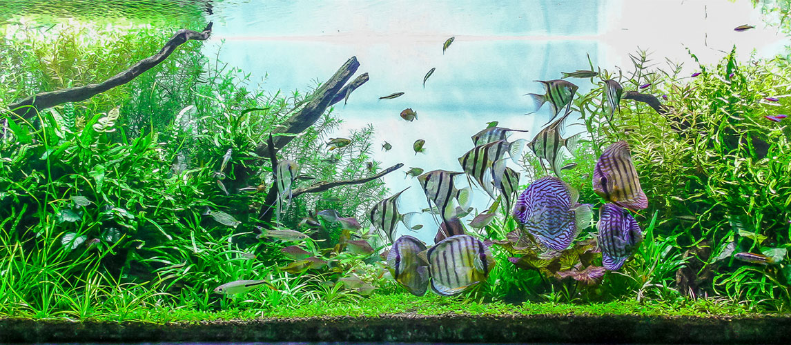 Best-Canister-Filter-For-Aquarium