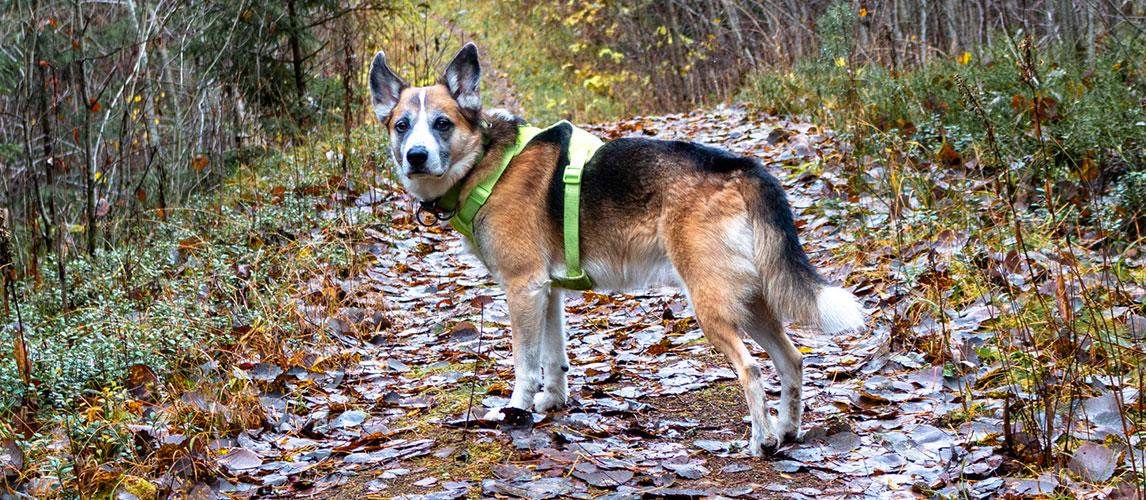 Best-Dog-Harnesses-for-Running