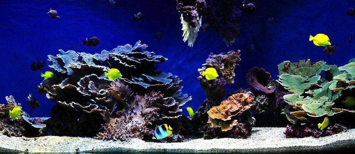Best-Nano-Reef-Tanks