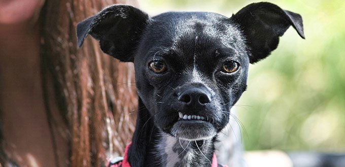 Black dog with an overbite