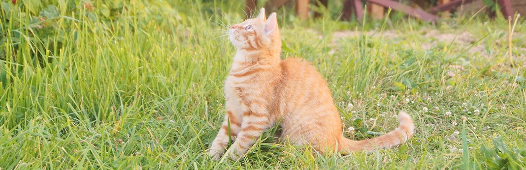 Cat Tail Language: What Your Cat's Tail is Trying to Tell You