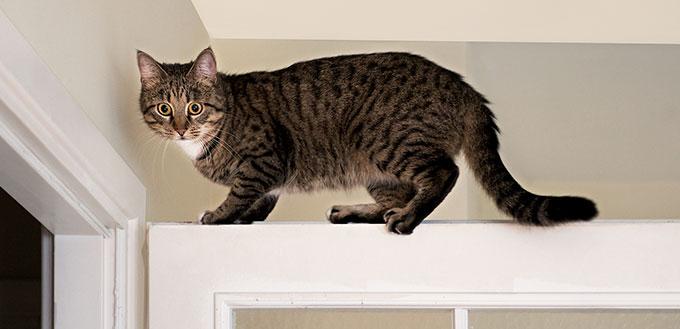 Cat on the top of the door