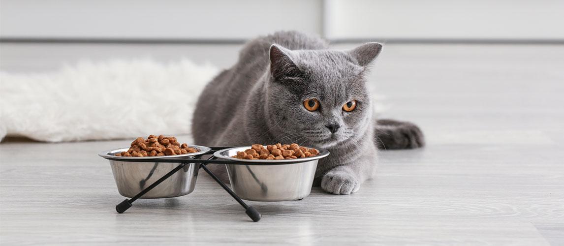 Crave-Cat-Food-Review
