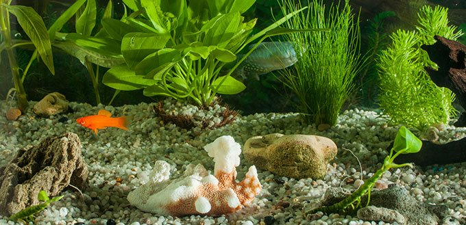 Freshwater aquarium with fishes
