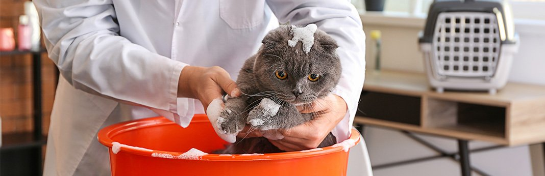 How to Bathe a Cat (Without Getting Scratched)