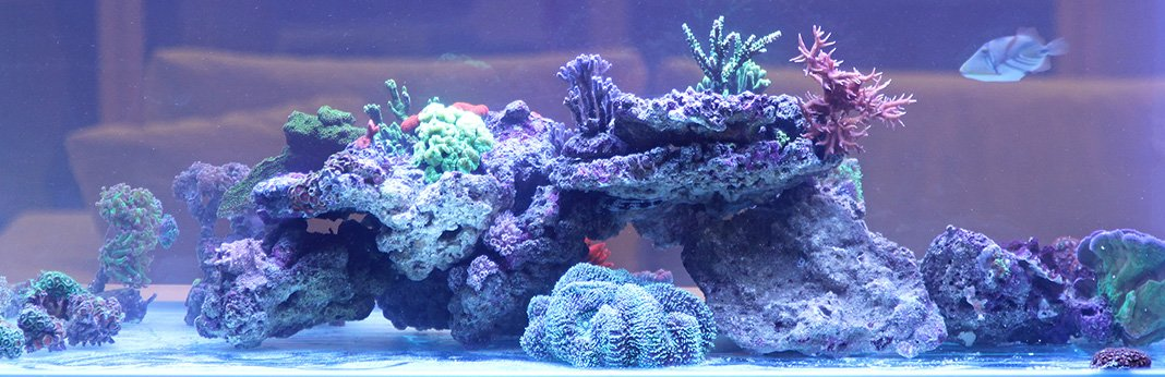 How to Fix Cloudy Water in a New Fish Tank
