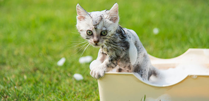 Kitten taking a bath in the garden