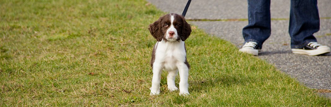 Leash Training: How to Leash Train a Puppy