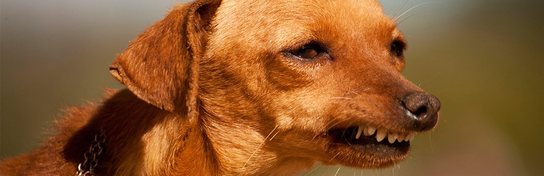 Overbite Dog: Causes & Treatment of Overbite in Dogs