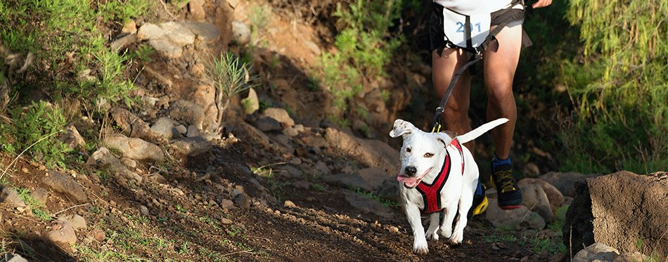 Owner and his dog running