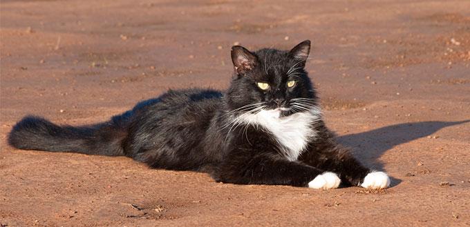 Tuxedo cat lying on the sand