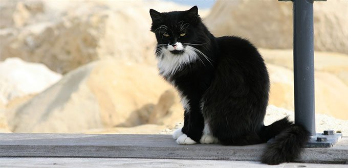 Tuxedo cat sitting on a bridge