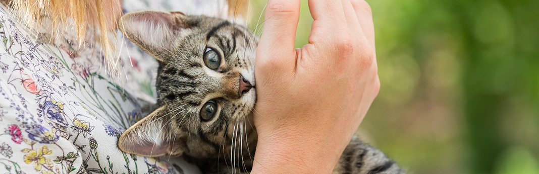 Why Do Cats Bite (And How to Stop It)