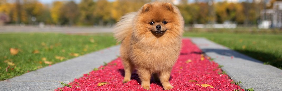 10 Most Beautiful Dog Breeds in the World
