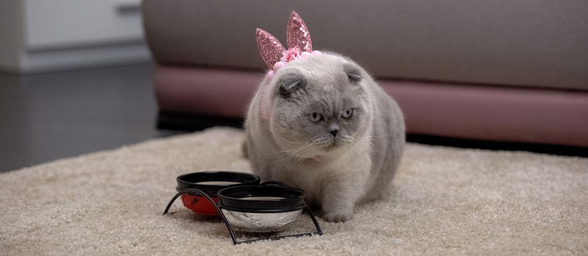 4health-Cat-Food-Review