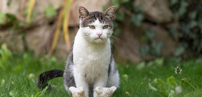 A tabby cat sitting next to a birdbath