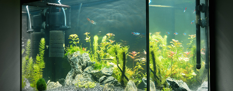 Beautiful planted tropical freshwater aquarium with fishes