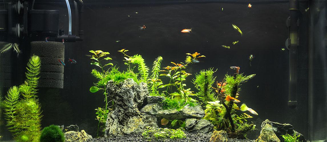 Best-Aquarium-Filter
