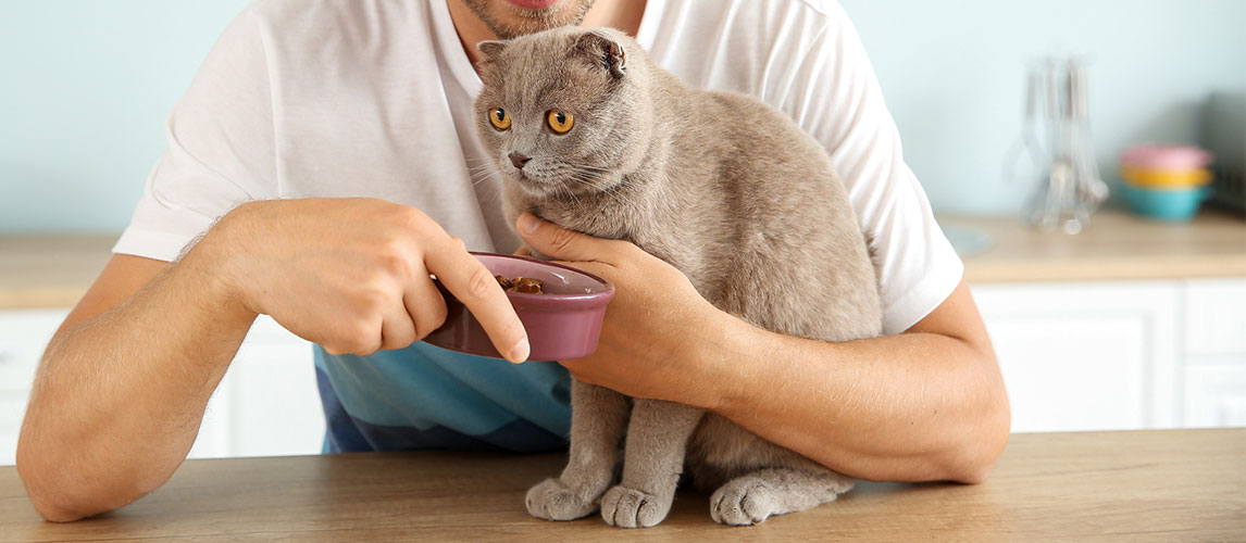 Best-Cat-Food-for-Smelly-Poop
