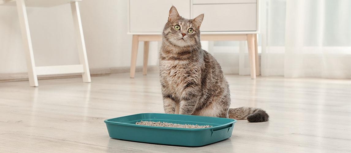 Best-Dust-Free-Cat-Litter