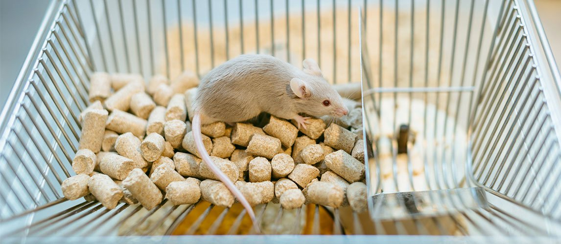Best-Mouse-Cage