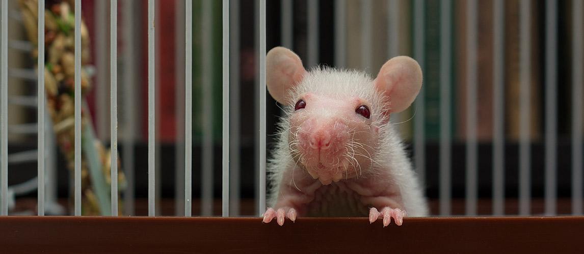Best-Rat-Cages