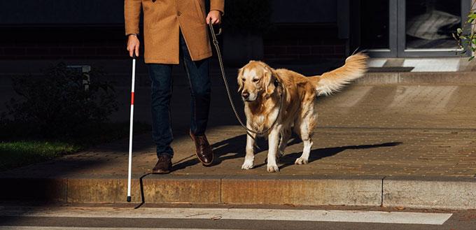 Blind man with dog walking