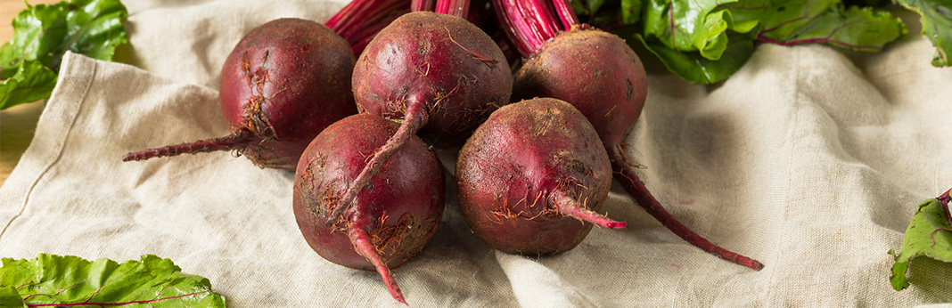 Can Dogs Eat Beets? (Nutritional Guide)