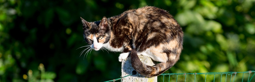 Cat Colors – Amazing Facts Behind Cat Coats & Patterns