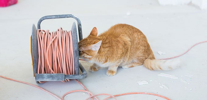Cat chewing cable