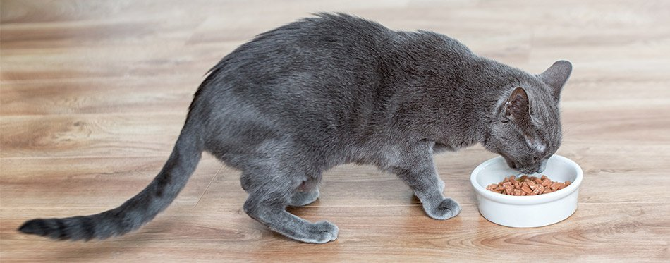 Cat eating wet food from white bowl