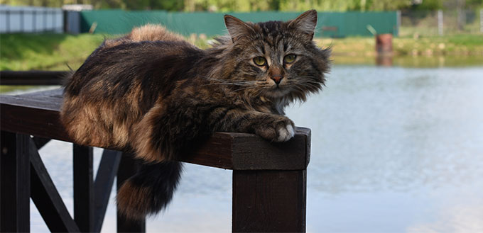 Cat lying next to the pond