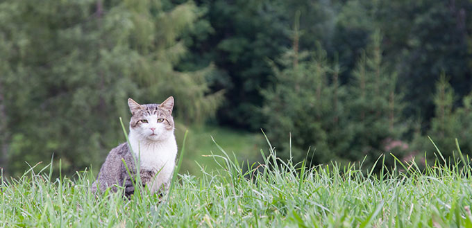 Cat sitting in a large green field