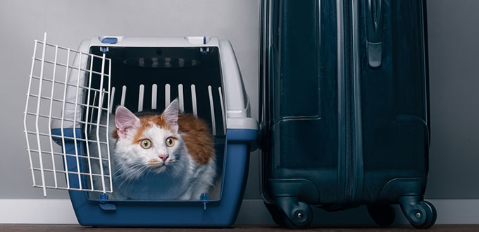 Cat sitting in a travel crate beside a suitcase