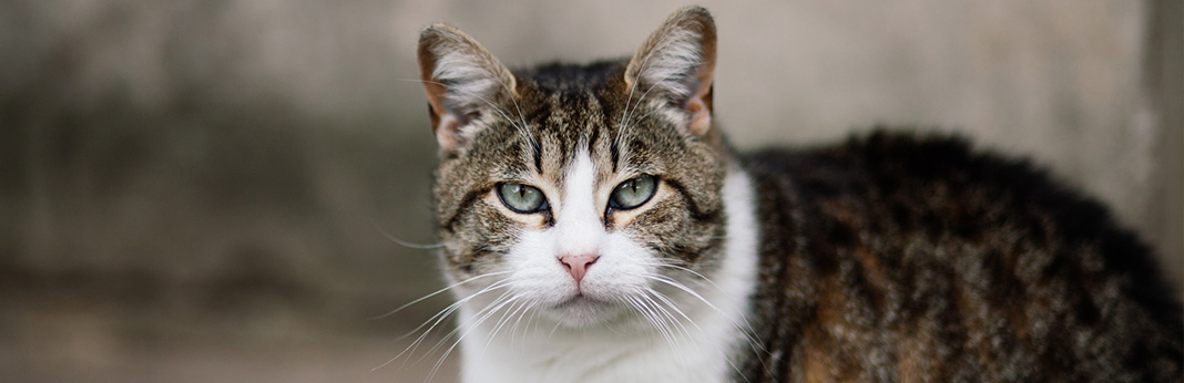 Causes and Treatments of Cat Eye Discharge