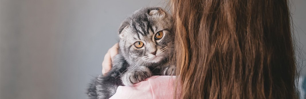 Do Cats Remember People How Long Is a Cat's Memory