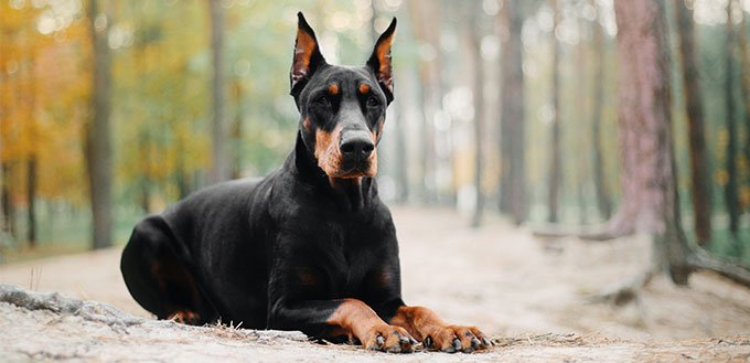 Most intimidating dog breeds pod dating site