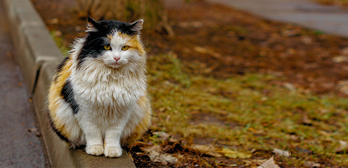 Fluffy colorful cat sitting