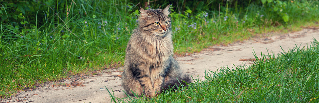 IBD in Cats: Symptoms and Treatment of Feline IBS