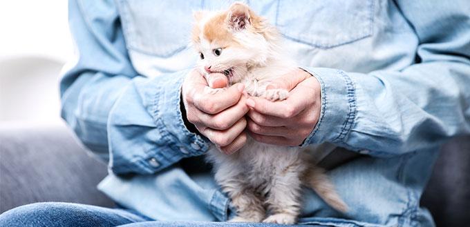 Kitten biting owners hands